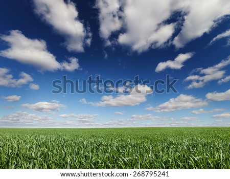 Panoramic beautiful landscape grass and cloud. - stock photo