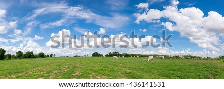 panoramic blue sky clouds with  green field landscape for background or backgrop nature concept - stock photo