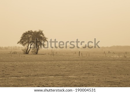 Panoramic environmental background view of a flat arid dusty landscape with two lone trees in semi-dessert grassland or prairie - stock photo