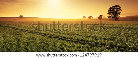 Panoramic image of a Clare Valley sunrise, Australia - stock photo