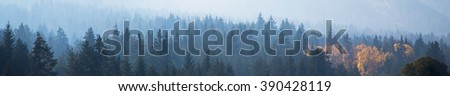 panoramic image of mysterious misty fog pine tree forest with yellow spot