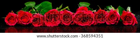Panoramic image of red roses with dew drops on a black background