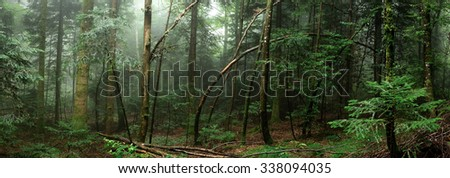 Panoramic in the forest with fog