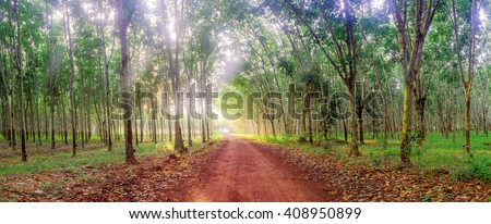 Panoramic landscape of the morning with sunshine on the road in para rubber garden. - stock photo