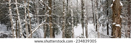 Panoramic landscape of winter forest after snowfall with tree trunks and snow covered trees - stock photo