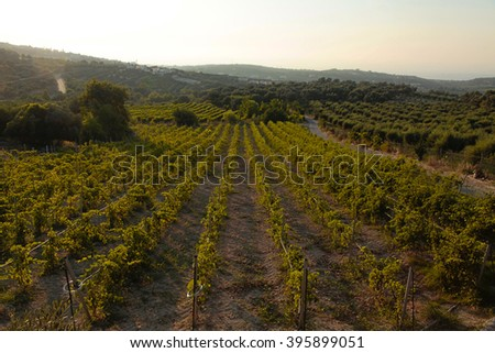 Panoramic landscape view of a vineyard,green hills and country road in Crete, Greece. Sunset light. - stock photo