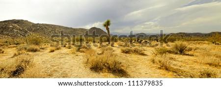 Panoramic photo of Joshua Tree National Park with cloudy sky. Solitude tree. USA, California. - stock photo
