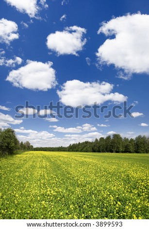 Panoramic photo of spring landscape with blue sky