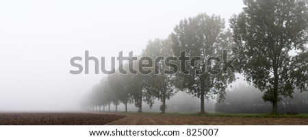 Panoramic - row of trees on the field edge in the mist - stock photo