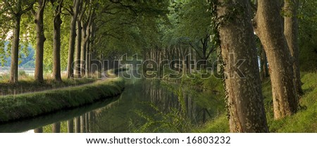Panoramic scene of a river surrounded by big trees
