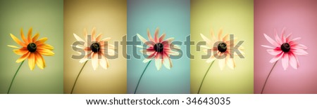 Panoramic set of 5 different colored flowers. Large image with rich color variation. Use in your design! - stock photo