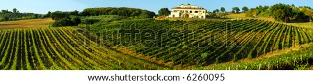 Panoramic shot of an Italian vineyard in rolling countryside north of Rome, Italy - stock photo
