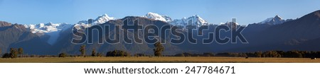 Panoramic shot of Southern Alps with grazing cows on the foreground, New Zealand. Large resolution - stock photo