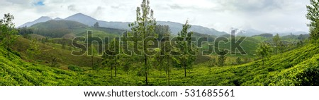 Panoramic view in Munnar in western Ghats, Kerala, Idukki district, India