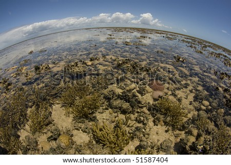 panoramic view of a coral reef at low tide, during day light in a sunny day. - stock photo