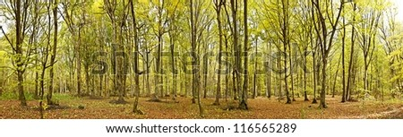 Panoramic view of a forest - stock photo