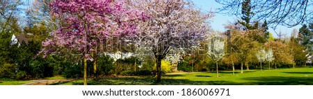 Panoramic view of a park - stock photo