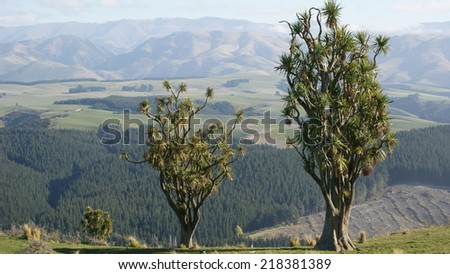 Panoramic view of a valley with three cabbage trees in the foreground - stock photo