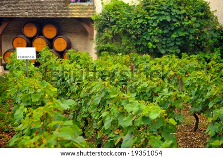 Panoramic view of a vineyard in Burgundy, France in late afternoon - stock photo