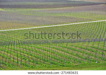 Panoramic view of a vineyard in Germany  - stock photo