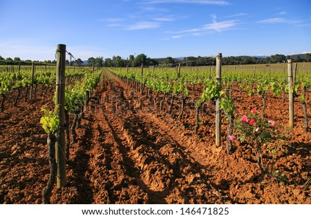 Panoramic view of a vineyard in Provence, France.   - stock photo