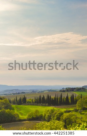 Panoramic view of a vineyard in the Tuscan countryside at sunset with trees - stock photo