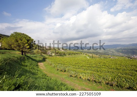 Panoramic view of a vineyard in the Venetian countryside - Valpolicella - stock photo