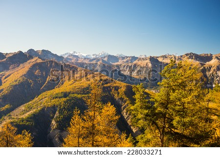 Panoramic view of alpine mountain range in a colorful autumn with yellow larch trees and high mountain peaks in the background. Wide angle shot in warm afternoon light.