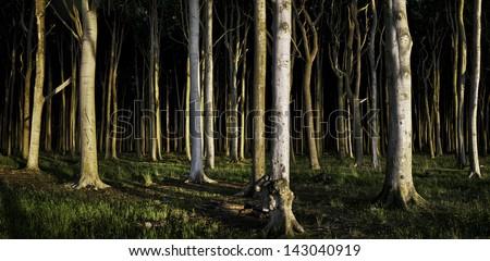 Panoramic view of deep, dark forest - stock photo