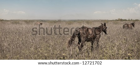 Panoramic view of field with wild horses