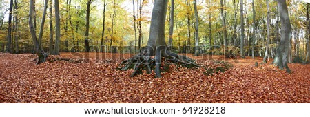 panoramic view of forest floor full of leaves in autumn time - stock photo