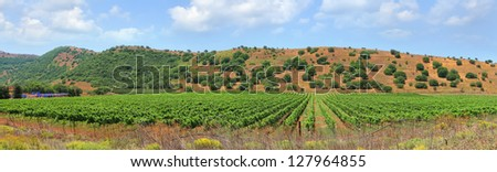 Panoramic view of grapes plantation valley in the north of Israel - stock photo