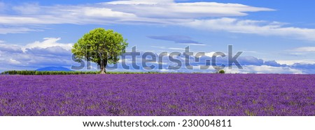 Panoramic view of lavender field with tree, France. - stock photo
