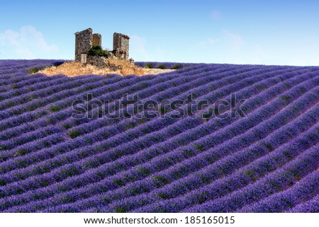 Panoramic view of lavender fields in Provence, France - stock photo
