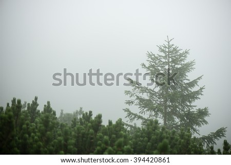 panoramic view of misty forest. far horizon - stock photo