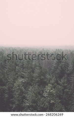 panoramic view of misty forest. far horizon - retro vintage film effect - stock photo