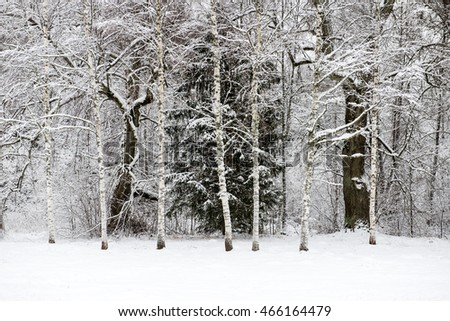 panoramic view of misty forest. far horizon. winter scene