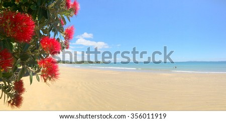 Panoramic view of Pohutukawa red flowers blossom on the month of December in doubtless bay New Zealand. - stock photo