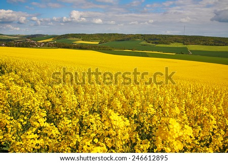 Panoramic view of rapeseed field and green meadows in France