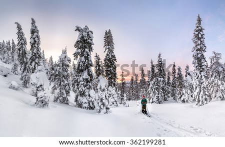 Panoramic view of sunset in the snowy forest, with one skier on the ski run.