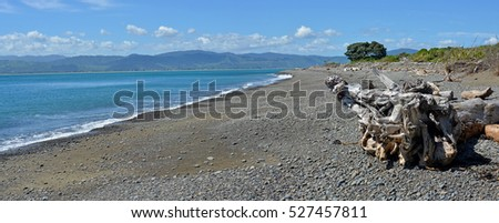 Panoramic view of the Kapiti Coast from Kapiti Island Bird Sanctuary. In the foreground is dramatic driftwood. In the background is Paraparaumu, Waikanae and Raumati.