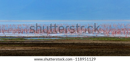 Panoramic view of the millions of flamingos on lake in Crater Ngorongoro - Tanzania, Eastern Africa - stock photo