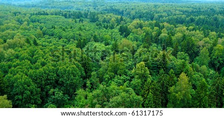 panoramic view of the russian forest in cloudy day - stock photo