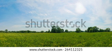 Panoramic view of the spring meadow full of yellow flowers with blue sky on bright sunny day. - stock photo
