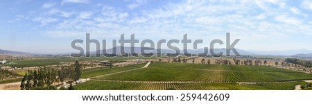 Panoramic view of the vineyard in Chile - stock photo