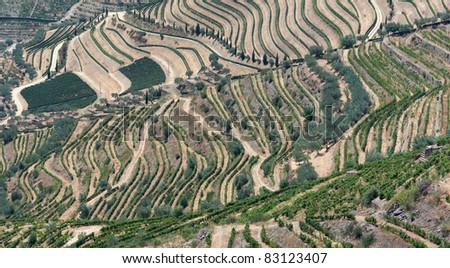 Panoramic view of the world famous vineyards of Porto wine. - stock photo