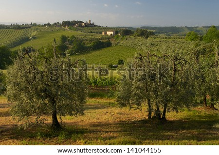Panoramic view on vineyards and olive trees from foot of San Gimignano's city walls early morning. - stock photo
