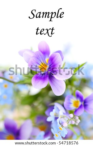 pansies on white isolated background.border. Floral border. - stock photo