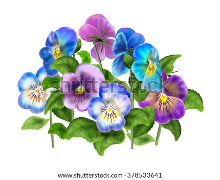 Pansy, colored violet Viola tricolor, spring flowers, isolated on white background. Digital illustration. Art, print, web, fashion, textile, texture, home decor.