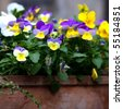 Pansy flower in a rustic flower pot - stock photo